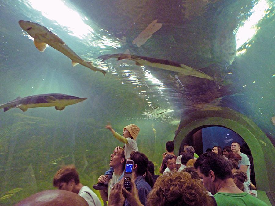 Tisza-tavi Ökocentrum – Poroszló