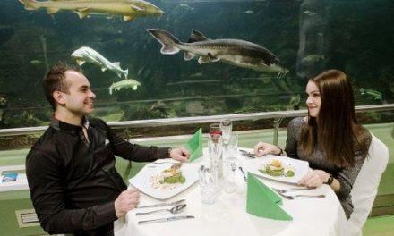 Itt még nem vacsoráztál!